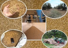 composición biomasas